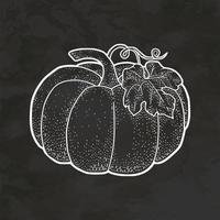 vector de ilustración vintage de bosquejo de estilo retro dibujado a mano de calabaza