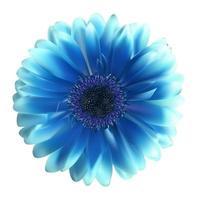 Gerbera Flower Background Vector Illustration