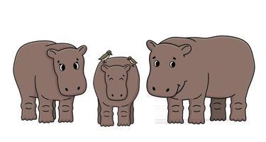 Conjunto de dibujos animados de contorno vectorial marrón de tres hipopótamos de pie en el suelo. dos pájaros picabueyes están en el lomo de hipopótamo. garabato, aislado, familia, ilustración, blanco, plano de fondo vector