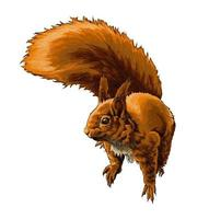 Eurasian red squirrel from a splash of watercolor, colored drawing, realistic. Vector illustration of paints