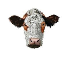 Brown cow head portrait from a splash of watercolor, colored drawing, realistic. Vector illustration of paints
