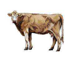 Brown cow from a splash of watercolor, colored drawing, realistic. Vector illustration of paints