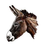 Donkey head portrait from a splash of watercolor, colored drawing, realistic. Vector illustration of paints