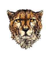 Cheetah head portrait from a splash of watercolor, colored drawing, realistic. Vector illustration of paints