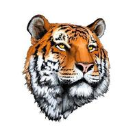 Tiger head portrait from a splash of watercolor, colored drawing, realistic. Vector illustration of paints