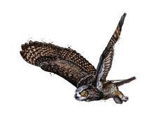 búho chico, búho real de un toque de acuarela, dibujo coloreado, realista. ilustración vectorial de pinturas vector