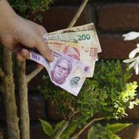 Mano de una mujer sosteniendo billetes mexicanos en un jardín. foto