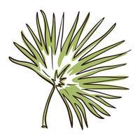Line art Chamaerops Leaf vector