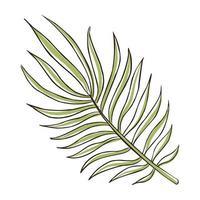 Hand Drawn Palm Leaf vector