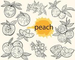 Vector outline peach sketch set