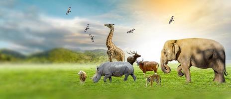 Wildlife Conservation Day Wild animals to the home. Or wildlife protection photo