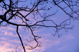 silueta de árboles con bonito fondo de cielo, bosque foto