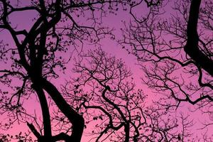 silueta de árboles con fondo de cielo hermoso, bosque foto