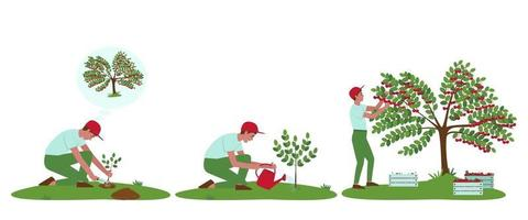 Cherry tree care illustrations set vector