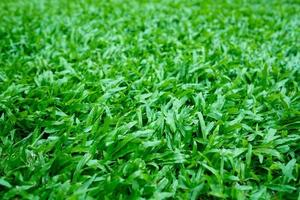 Green grass background, football field photo