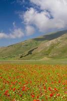 Castelluccio Di Norcia and its flowering nature photo