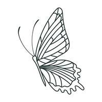 pretty butterfly design vector