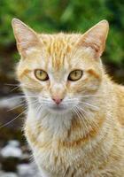 Beautiful stray cat portrait photo