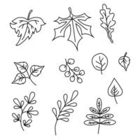 Set of elements for the autumn season. Black contour drawings of various leaves. Use for fall design and decoration. Vector. All elements are isolated on white background vector