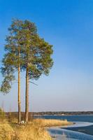 Tall pine trees on the sandy shore of lake photo