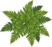 Fern leaves cartoon style isolated vector