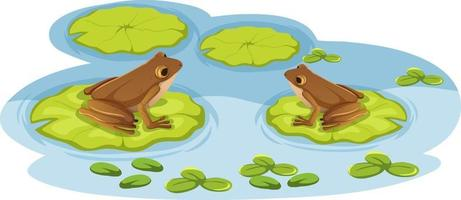 Two frogs on lotus leaves in the water vector