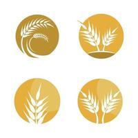 imagenes de trigo vector