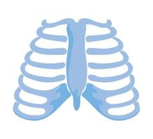 normal ribs joints vector
