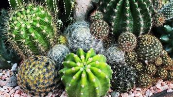 Beautiful Cactus Garden video