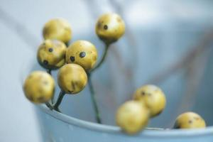 Branches of trees with yellow berries. Macro photo, selective focus. Close-up, abstract photo. Floral background. photo