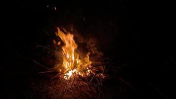 Night Campfire in The Dark Forest video