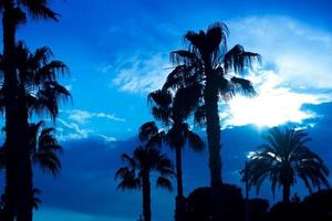Palm trees sunset golden blue sky backlight photo