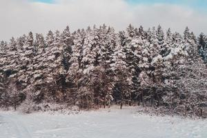 Beautiful pine tree, picturesque winter landscape, aerial view. photo