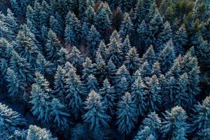 Aerial forest view in cold season photo