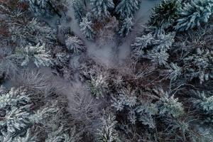 Aerial view of forest from aerial view, amazing winter scene, christmas theme, winter background. photo