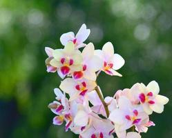 Nice orchid flowers photo