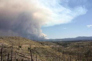 Evidence of old forest fire in the Gila NF with billowing smoke from current Johnson fire in background photo
