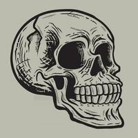 Retro vintage skull in side view angle vector