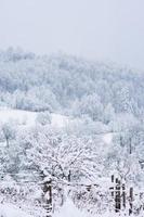 bosque del paisaje en la temporada de invierno foto