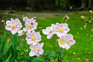 Pink Flowers in a Garden photo