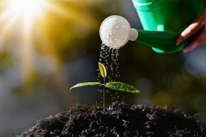 Farmers are watering seedlings. photo