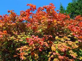 a principios de otoño en la reserva metolius cerca de camp sherman o foto