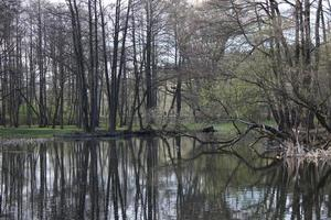 Natural landscape in early spring. Lake or river photo
