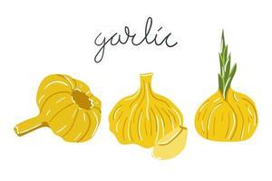 Hand drawn garlic. Flat modern illustration. vector