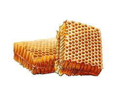 Honeycomb colored drawing, realistic. Vector illustration of paints