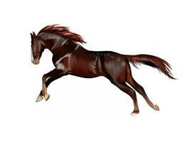 Horse running at a gallop from splash of watercolors, colored drawing, realistic. Vector illustration of paints