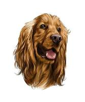 English Cocker Spaniel head from splash of watercolors, colored drawing, realistic. Vector illustration of paints