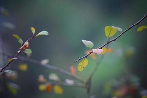brotes y ramas en la temporada de primavera. foto