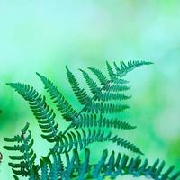 Green fern leaves in spring season photo