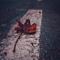 Red dry tree leaf in autumn season photo